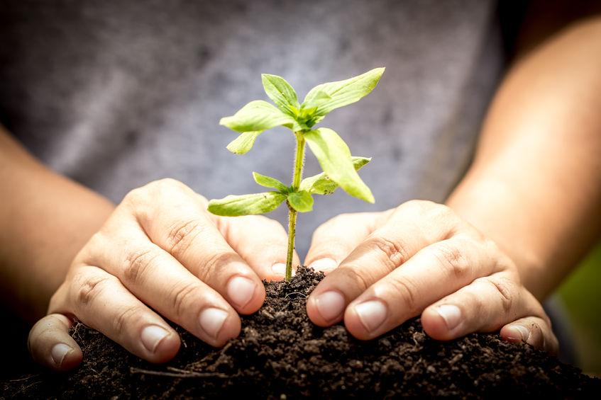Farmers raise money to build new vegetable farm for city kids