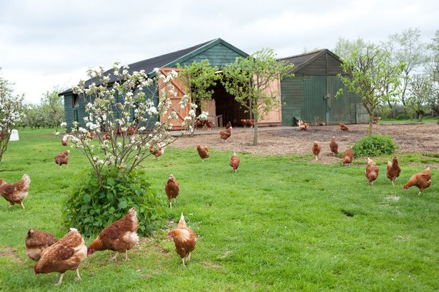 Council-run care farm to receive £350,000 investment