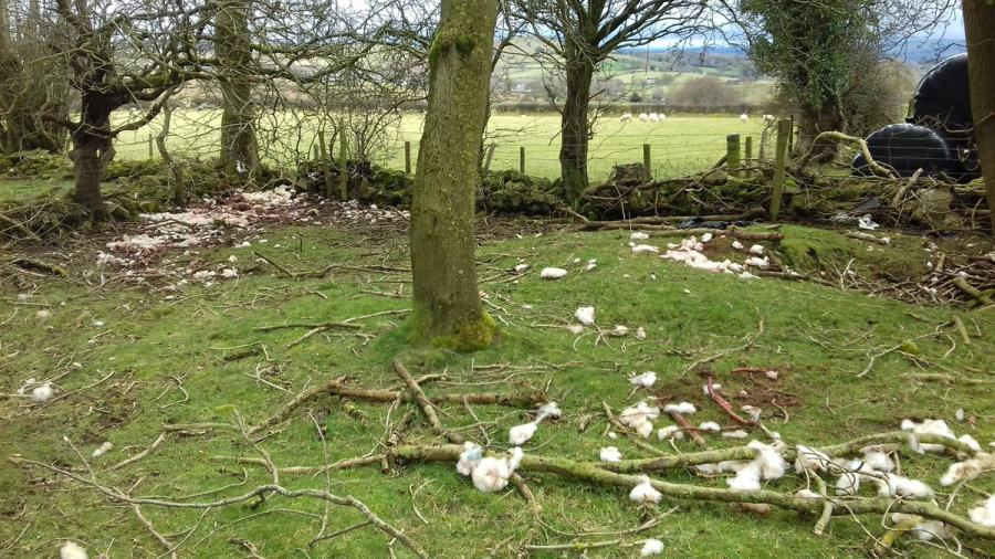 """The white you can see is the remnants of sheep fleece"" (Photo: NW Rural Crime Team)"