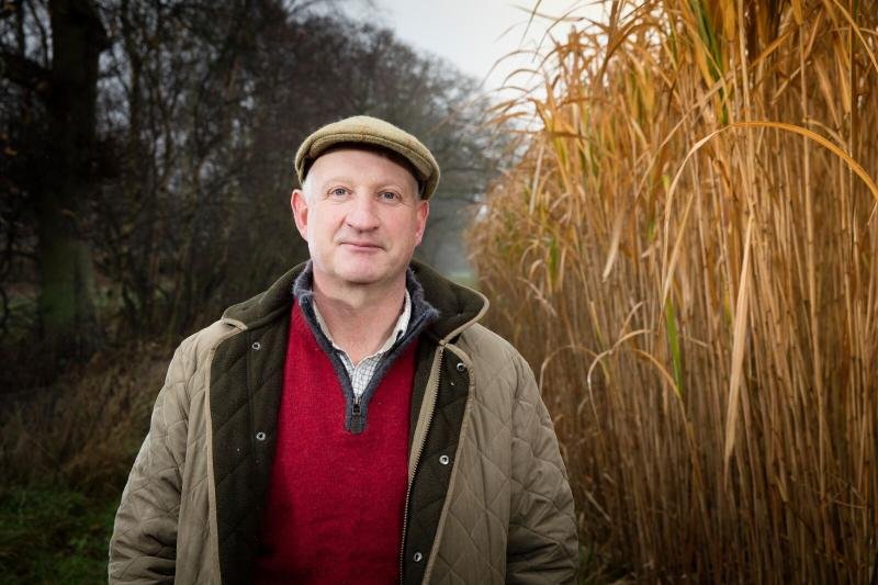 Norfolk's new biomass power station fuels demand for Miscanthus