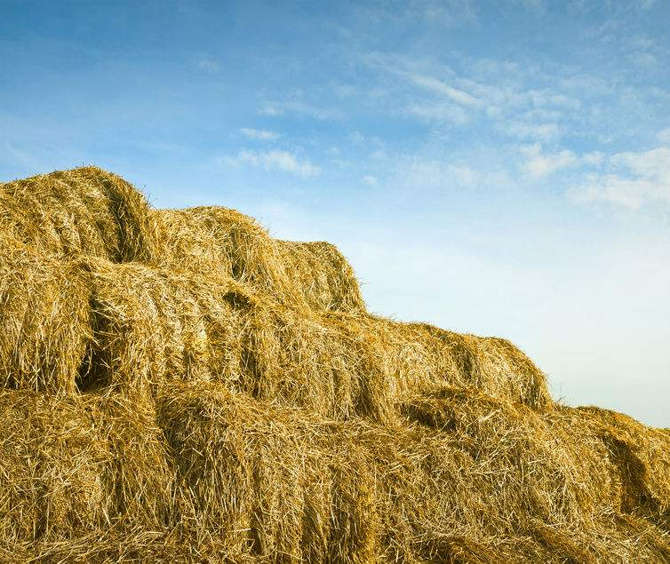 'Severe shortage' of straw down to poor harvest and power station demand