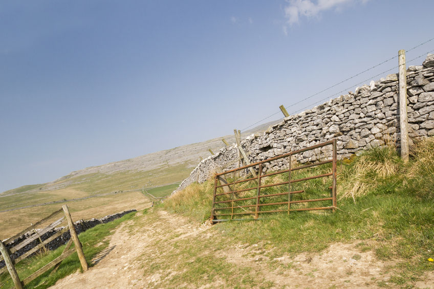 Unknown person keeps removing farm gate letting cows out, police warn