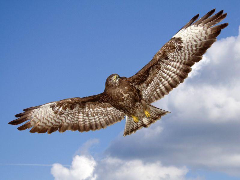 Bird flu confirmed in wild bird in County Antrim, Northern Ireland