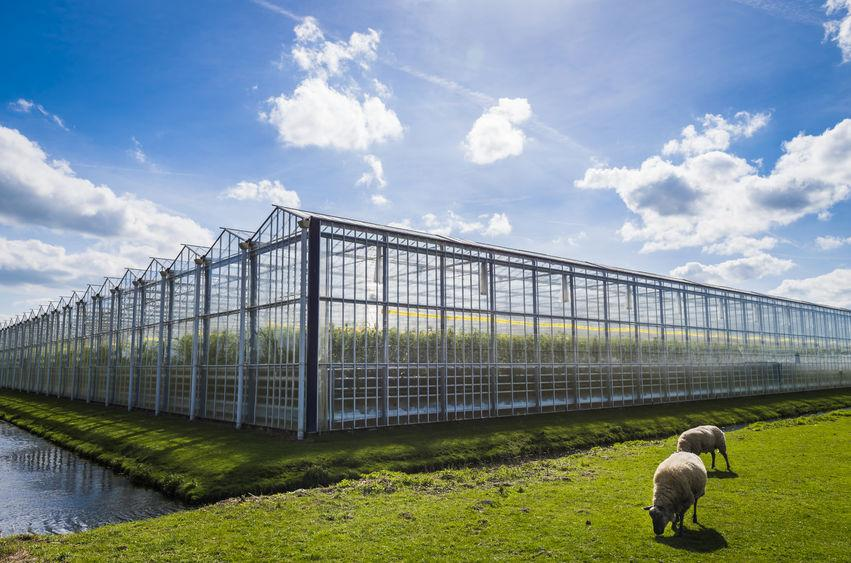 UK should copy Dutch model of intensive greenhouse agriculture, Sue Hayman says
