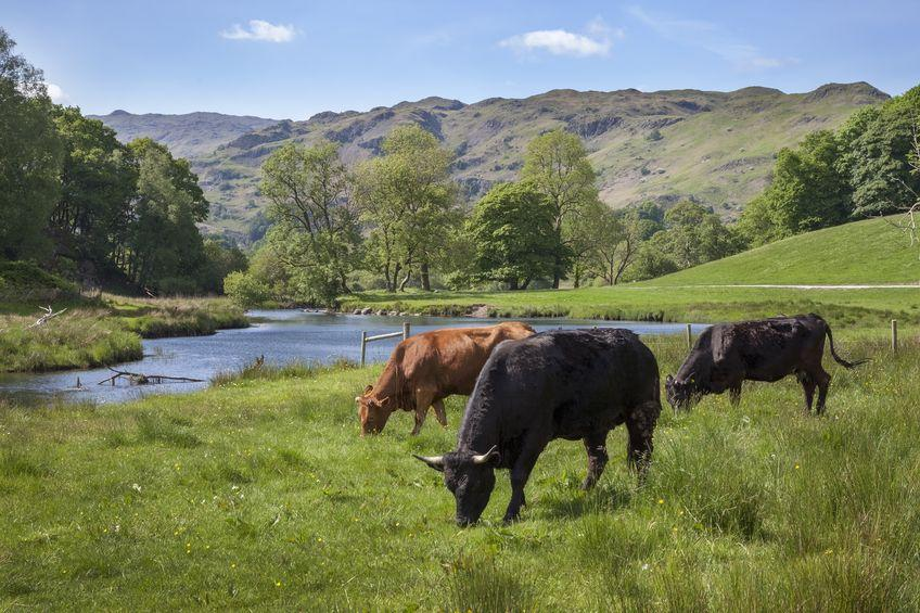 Laws now in place for farmers in England to protect water quality