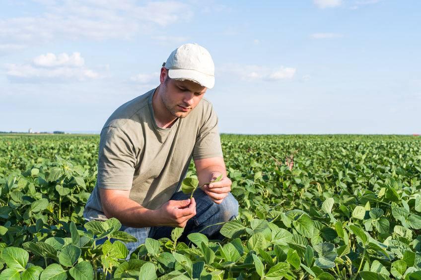 Scottish farmers urge reconsideration of rules around new entrant eligibility