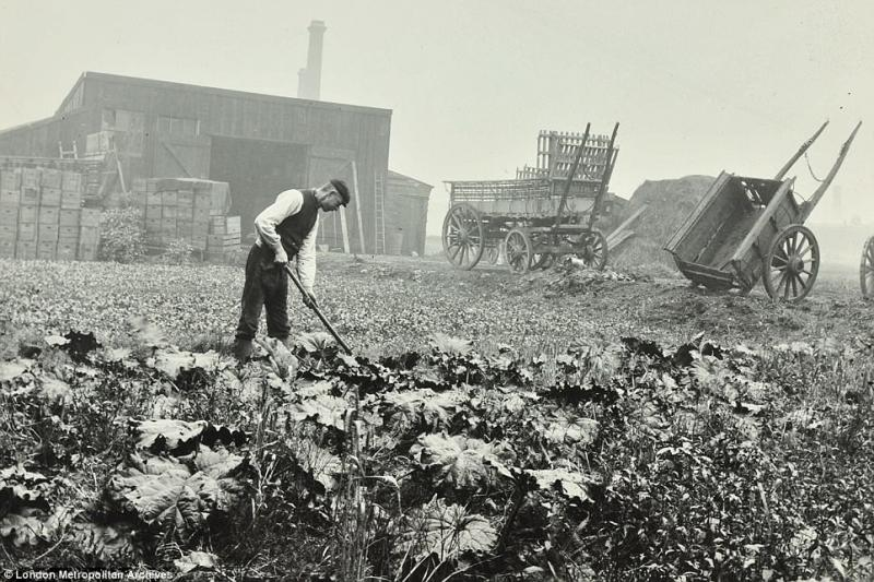 London's forgotten farms and food markets remembered