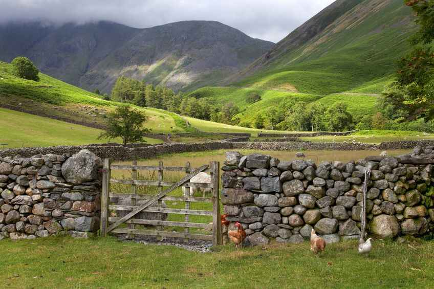 Extension agreed for Scottish Upland Sheep Support Scheme