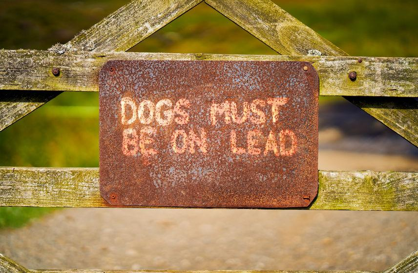 The sheep industry has called for the introduction of mandatory leads on dogs around livestock