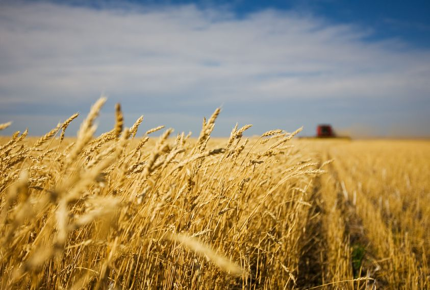 Bioethanol is fermented from feed wheat which is grown by farmers and would not otherwise go into the food chain
