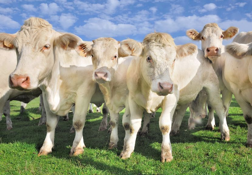Beef farmers urged to choose right genetics to maximise returns