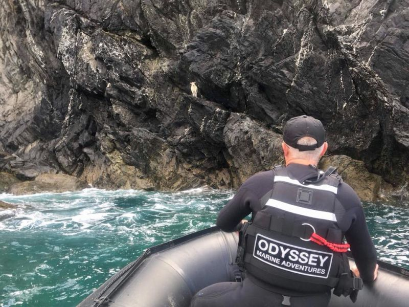 Stranded lamb finally rescued after four days on cliff edge
