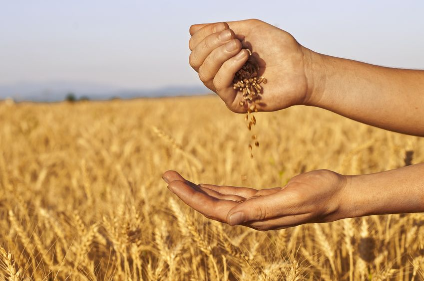 Cereals Development Programme to identify next generation of arable farmers