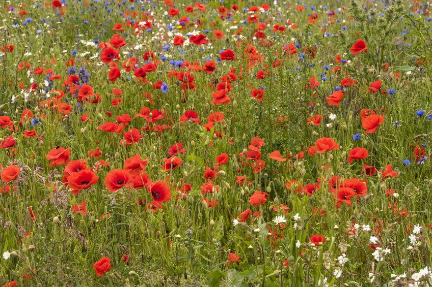 Farmers have called on the government to make Countryside Stewardship fit for purpose