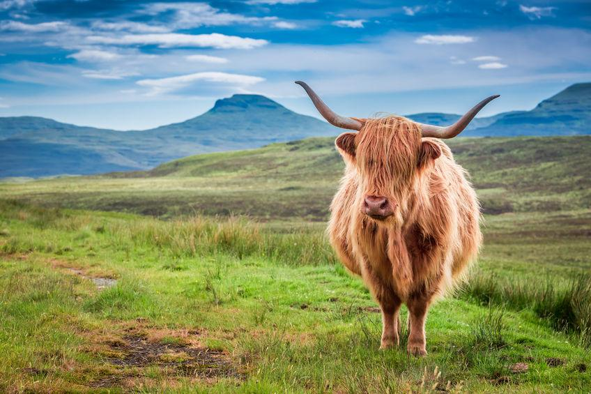 Bill pushed to recognise importance of farming to Scottish islands