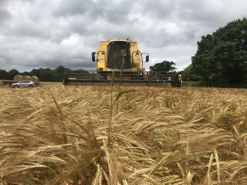 Devon farmer takes first cereal harvest of the year