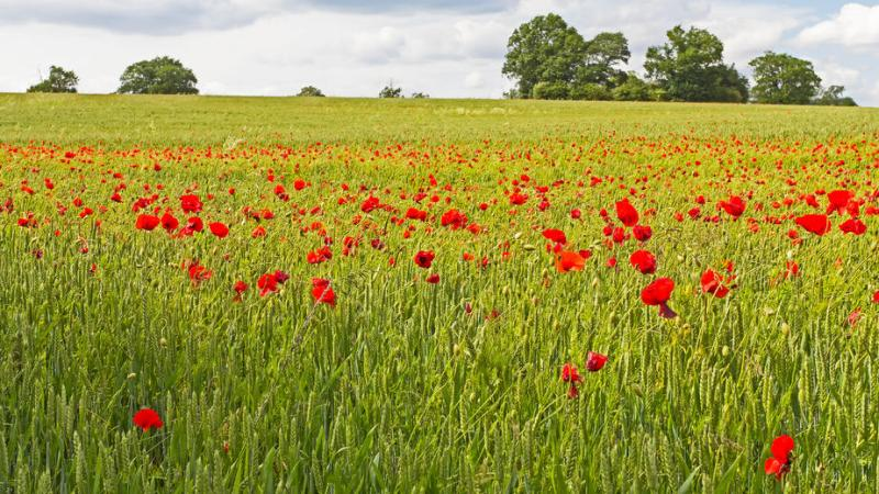 NFU raises 'serious concerns' over eligibility for Countryside Stewardship bridging payments