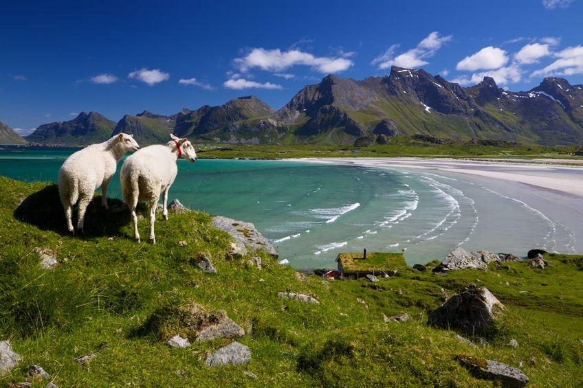 Scenic dairy farm in Norway seeks British farmers to help out