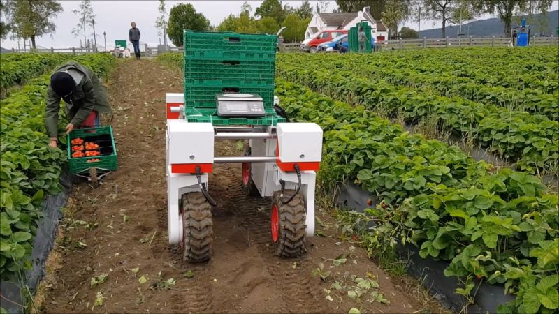 The machines are designed to increase productivity at the point the fruit is picked