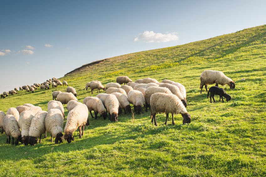 Public holds concerns for Welsh farming once UK leaves EU, survey shows