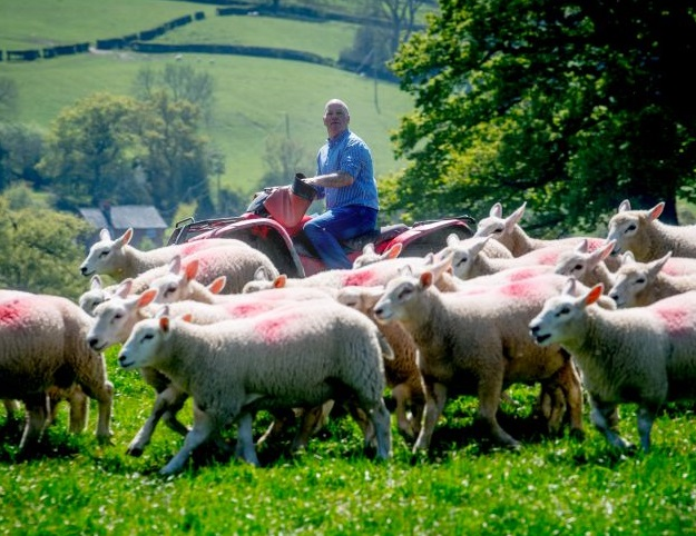 Tesco improves cost of production contracts for its 160 lamb farmers