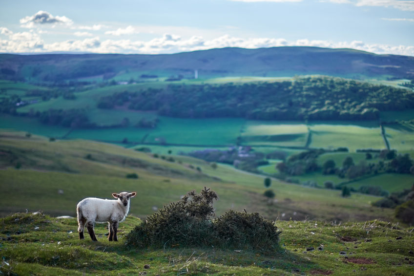 Importance of red meat production in Wales 'must be fully recognised'