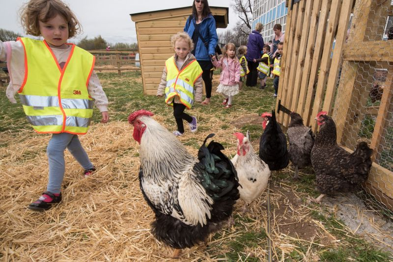 Teachers face 'workload and pressure' when teaching food and farming