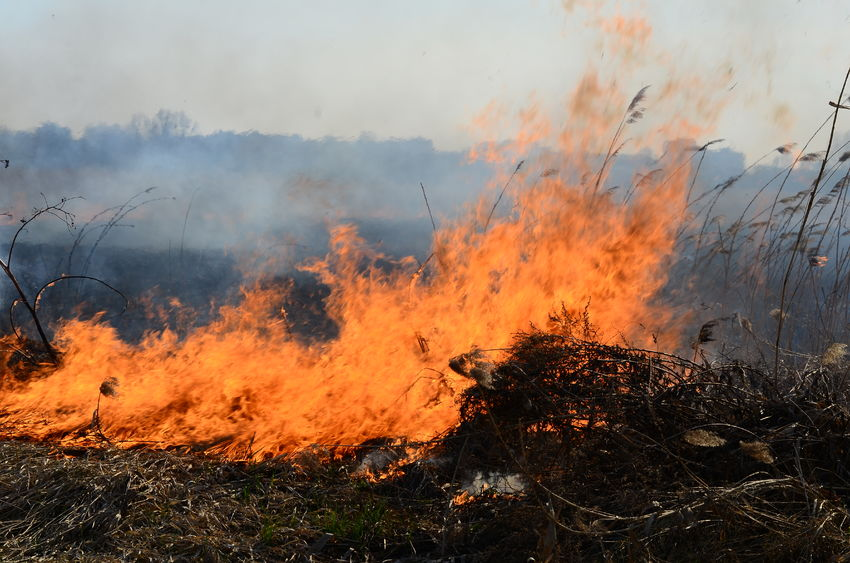 Suspicious fire in East Lothian destroys crops worth over £100,000
