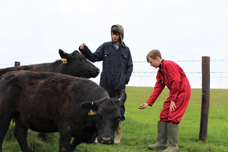 Farm charity which helps disadvantaged children receives cattle donation