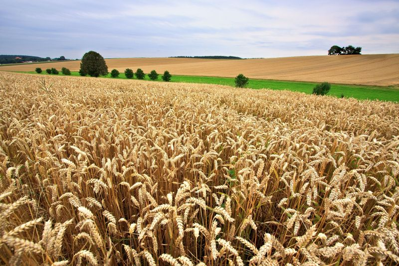 £500,000 investment to bolster nitrogen and sulphur research in oats and wheat