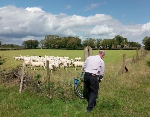 Paddocks system 'the only way to graze sheep', farmer says