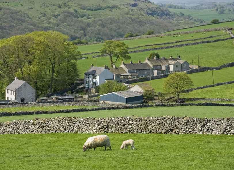 No-deal Brexit 'disastrous outcome' for NI sheep farming