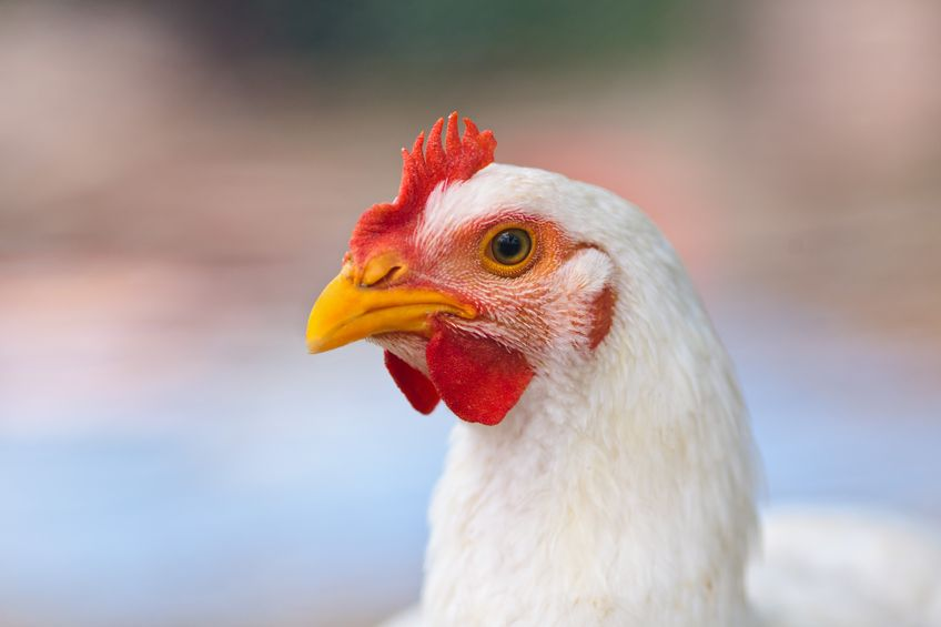 York council rejects plans for new 114,000 capacity poultry farm