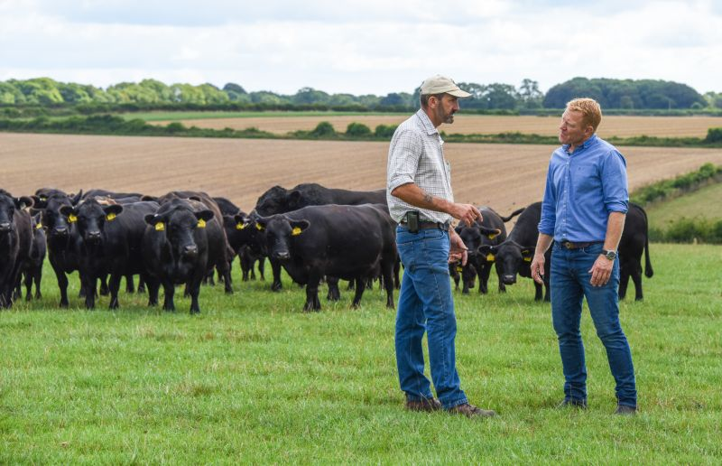 Lowline cattle breed to make debut TV appearance on BBC's Countryfile