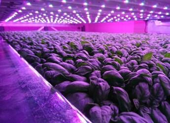 Scotland's first vertical indoor farm has been unveiled at Hutton Dundee site