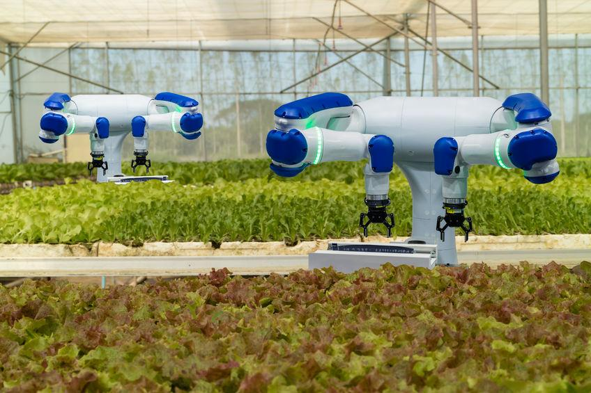 Robot harvesters, while developing rapidly, are still some way from widespread commercial application