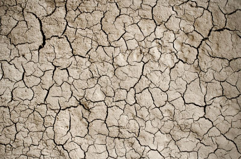 Farmers have seen 'little government action' on drought promises, NFU says
