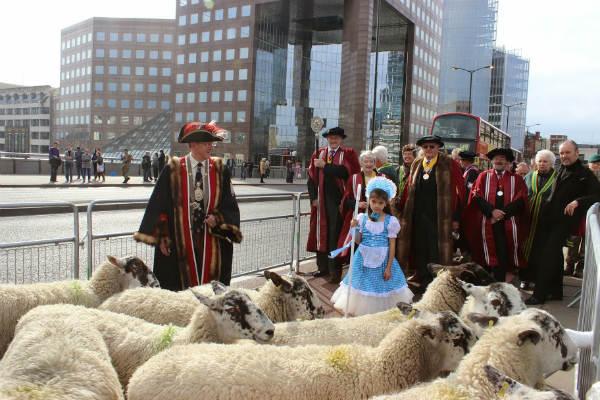 Woolmen drive sheep over London Bridge to promote British wool