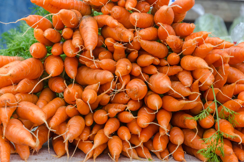 Farmers pledge support in cutting farm-to-fork food waste