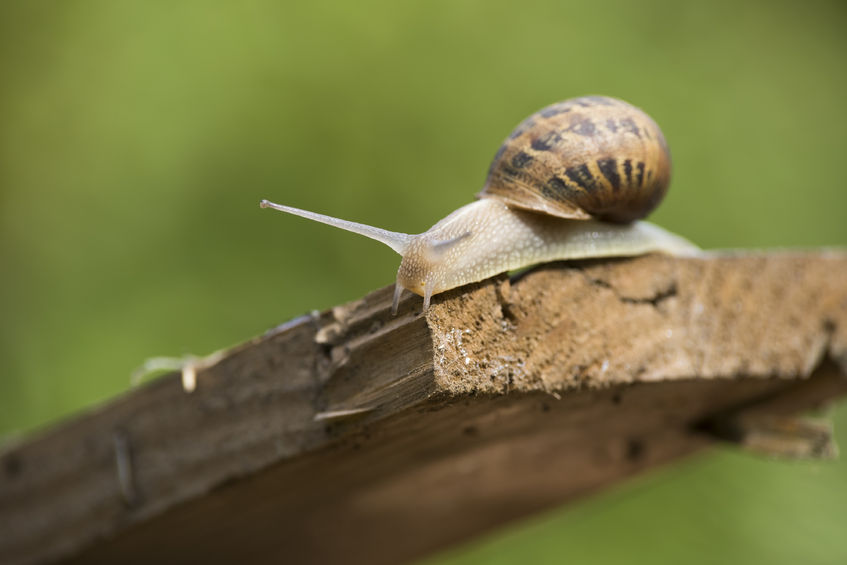 Farming family's new entrepreneurial idea is all about snails