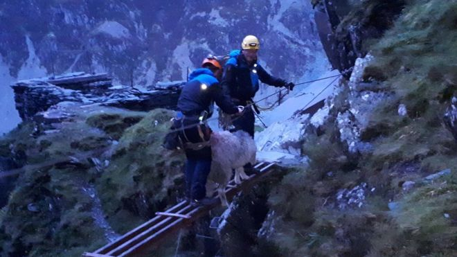 Stranded sheep stuck in crag for three weeks finally rescued