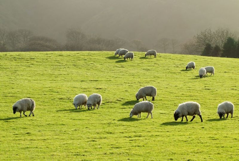 Welsh farmers urged to respond to 'most significant consultation in a generation'