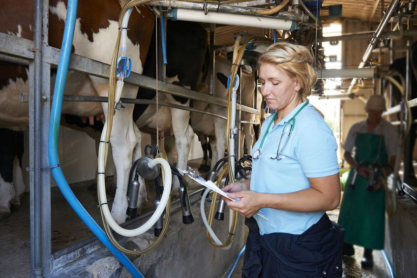 Brexit could 'decimate' UK's veterinary supply