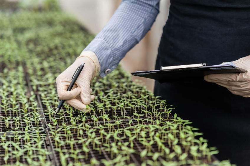 UK must diverge from EU crop genetic regulation, report warns