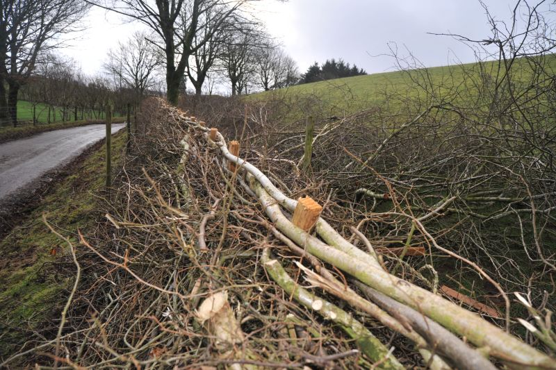 Applications open for subsidised hedge laying training course