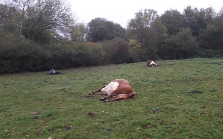 Nine cattle die after eating poisonous plant thrown in field