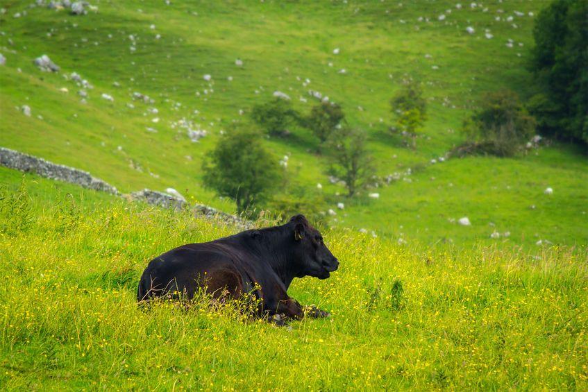New licensing arrangements for importing bovine semen into NI