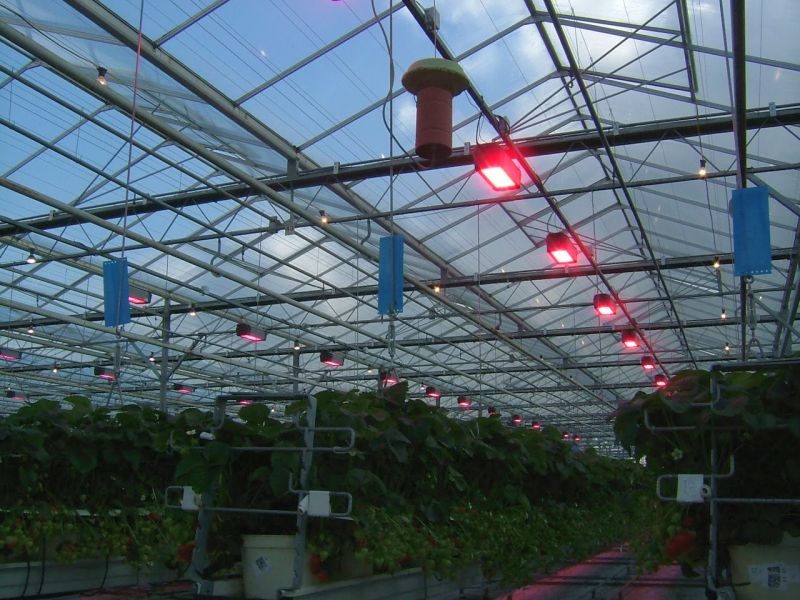 Energy saving programme extended to soft fruit sector