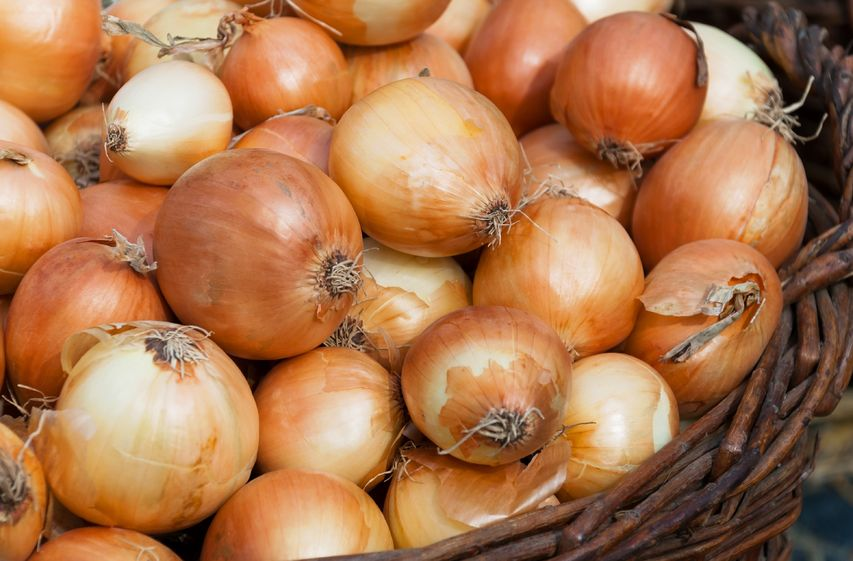 UK onion production 'severely affected' by 2018 weather