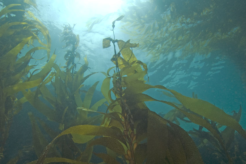 Seaweed technology could be answer to crop yield boost
